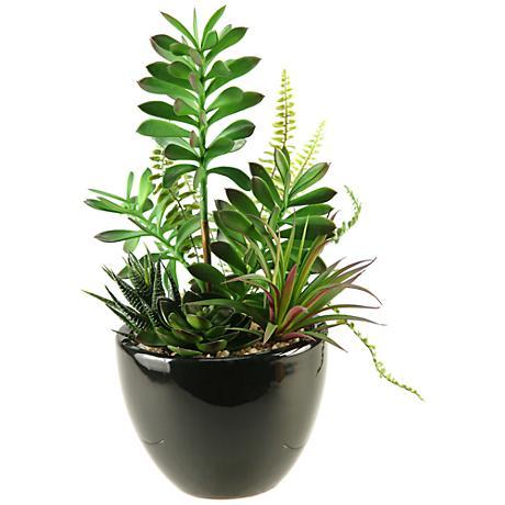 "Mixed Succulent, Aloe and Echeveria 14""H in Ceramic Planter"