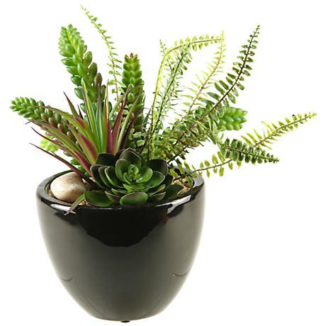 "Mixed Succulent, Aloe and Echeveria 14""W in Ceramic Planter"