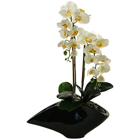 "Cream Phael Orchids 27"" High in Black Resin Planter"