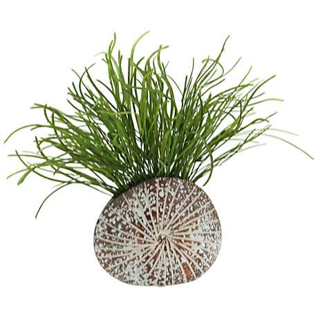 "Green Pearl Grass 14 1/2""W in Sand Dollar Planter"
