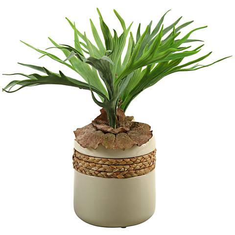 "Green Staghorn Fern 18"" High in Round Ceramic Planter"