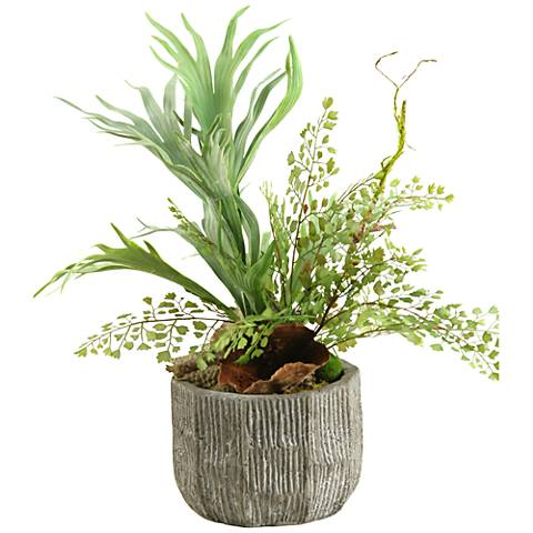 """Mixed Mini Staghorn and Flat Iron Fern 20"""" High in Bowl"""