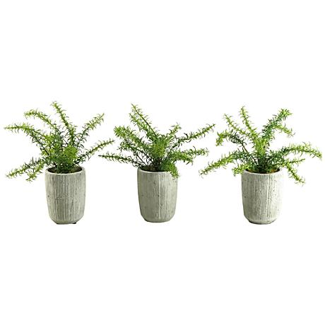 """Green Rosemary Bush 16"""" High in Set of 3 Concrete Pots"""