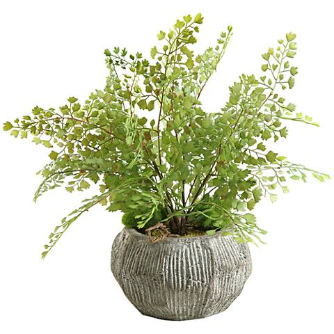 "Green Flat Iron Fern 17"" Wide in Concrete Bowl Planter"