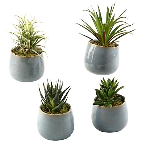"""Mixed Succulents 6"""" High in Set of 4 Small Ceramic Planters"""