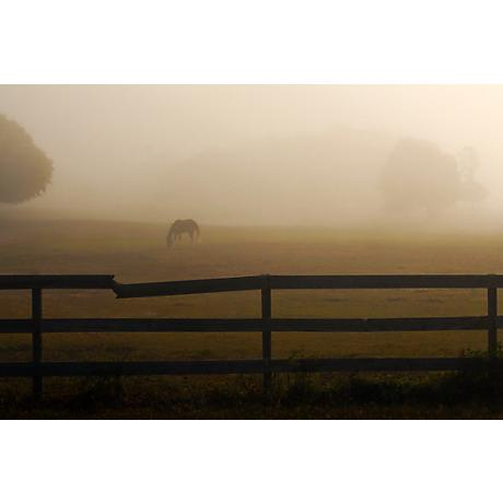 """Horse in Misty Pasture 24"""" Wide Sepia Giclee Wall Art"""