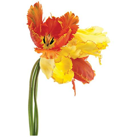 "Orange Yellow Parrot Tulip 48"" Wide Glass Wall Art"