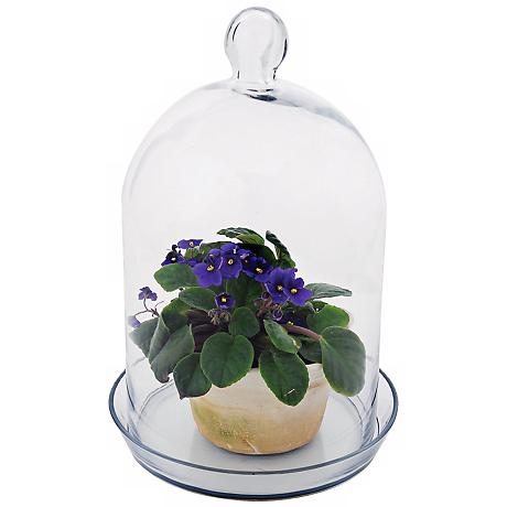 "Bell Glass 15"" High Jar Terrarium II"