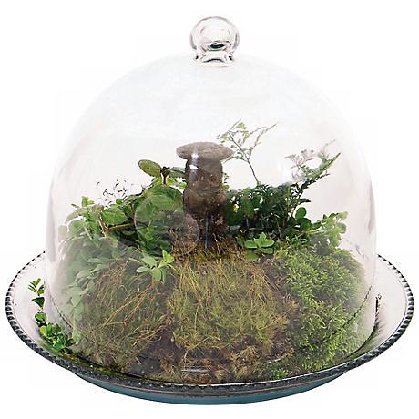 """Bell Glass 10"""" Wide Jar Terrarium III"""