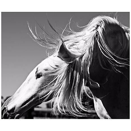 """Andalusian II 24 1/2"""" Wide Framed Horse Wall Art"""