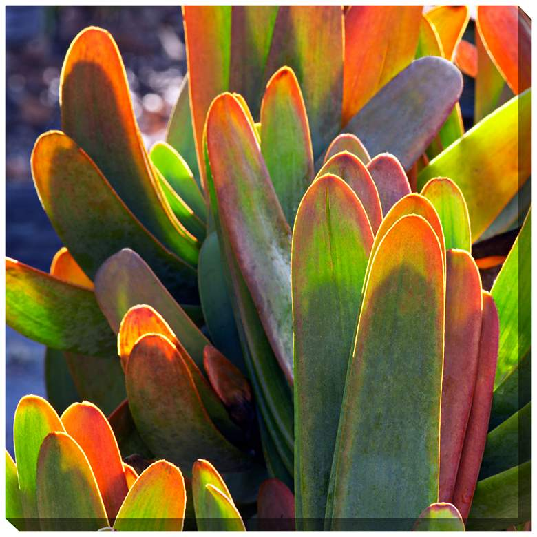"""Fan Aloe 24"""" Square All-Weather Indoor-Outdoor Wall Art"""