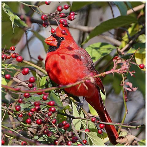 """Cardinal In Berries 24"""" Square Indoor-Outdoor Wall Art"""