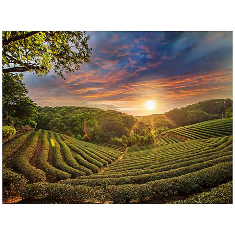 "Tea Plantation 40""W All-Season Outdoor Canvas Wall Art"