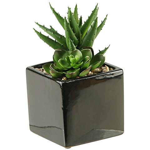"Green Echeveria and Aloe 7 1/2""H in Square Ceramic Planter"