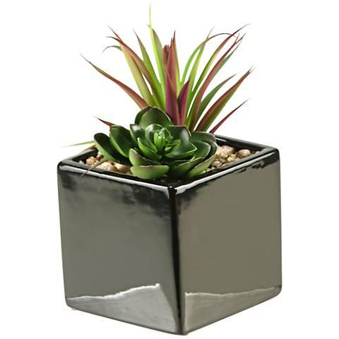 "Mixed Succulent and Echeveria 7 1/2""H in Ceramic Planter"