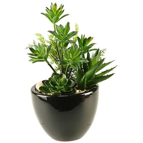 """Mixed Mini Dracaena, Aloe and Echeveria 11 1/2""""H in Planter"""