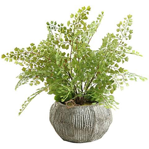 "Green Flat Iron Fern 17"" Wide in Concrete Bowl Planter"