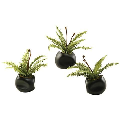 """Mini Boston Fern 10 1/2"""" Wide in Set of 3 Ceramic Planters"""