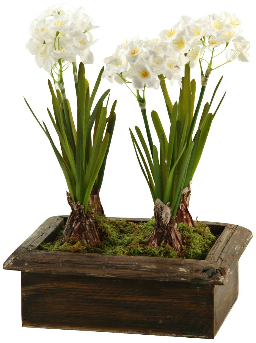 Cream Orchids In Clear Glass Vase 25 Quot High Faux Flowers