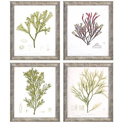 """Seaweed III 11"""" High 4-Piece Framed Giclee Wall Art Set"""