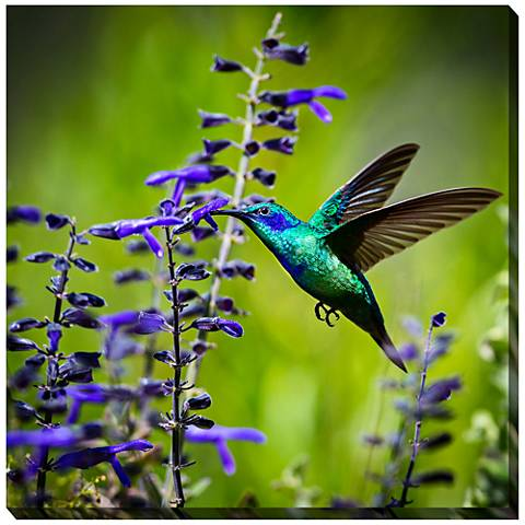 "Hummingbird 24"" Square Indoor-Outdoor Canvas Wall Art"