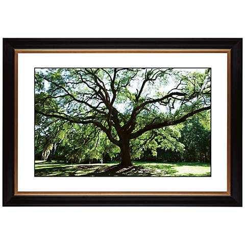 "Spreading Tree Giclee 41 3/8"" Wide Wall Art"