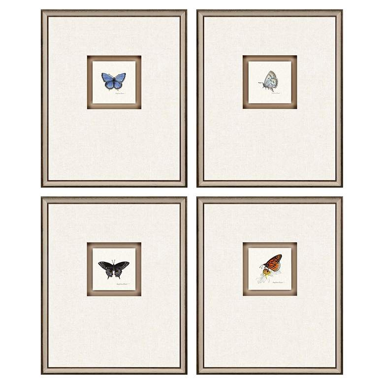 """Butterfly Study I 22""""H 4-Piece Framed Giclee Wall"""