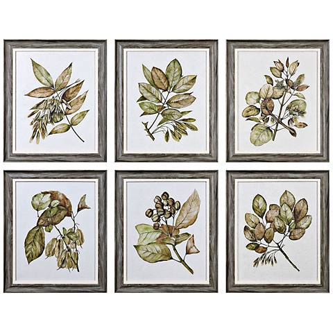"Uttermost Seedlings 6-Piece 24 1/4"" High Wall Art Set"